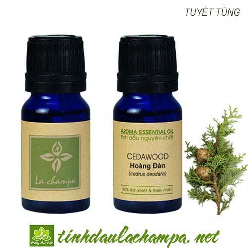 Tinh dầu gỗ Hoàng đàn - top tinh dầu tập thiền tốt nhất
