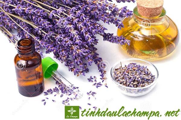 7 công dụng tuyệt vời khi sử dụng tinh dầu hoa Oải hương