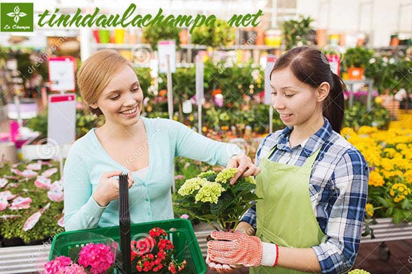 Hương thơm tinh dầu giúp tăng doanh số bán hàng