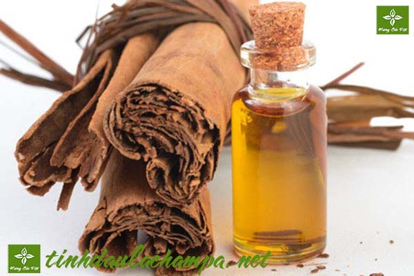Công dụng và cách sử dụng tinh dầu quế