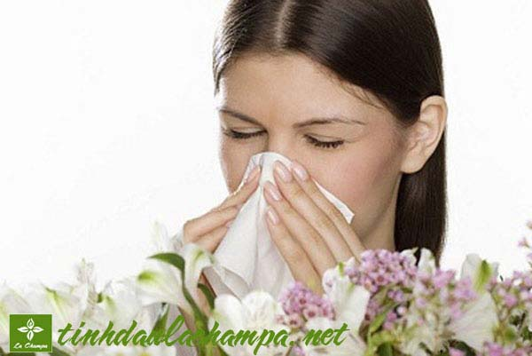 Trị bệnh viêm xoang bằng tinh dầu thiên nhiên