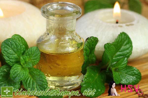 Tinh dầu Hương Nhu tinh chất- Những công dụng của tinh dầu Hương Nhu