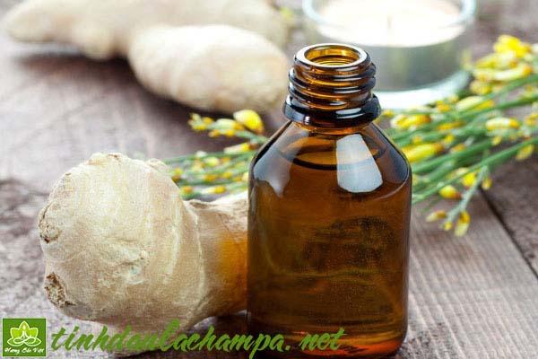 Cách dùng tinh dầu Gừng trị bệnh cảm cúm