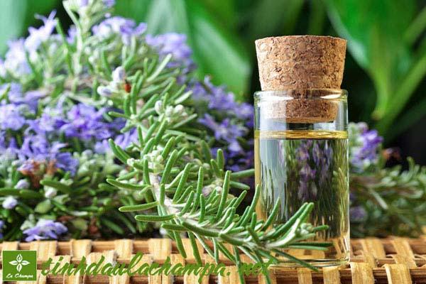 Tinh dầu Hương Thảo Extra giúp tăng cường trí nhó