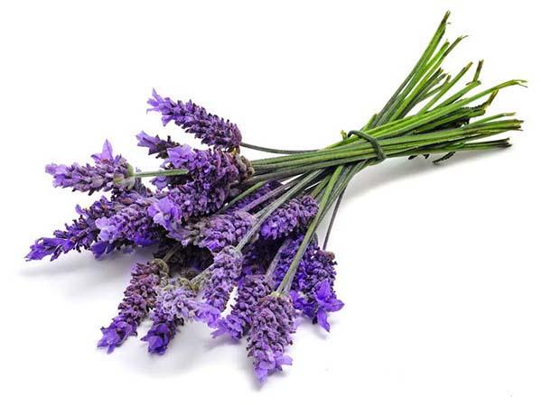 Công thức xông hương phòng bằng tinh dầu lavender