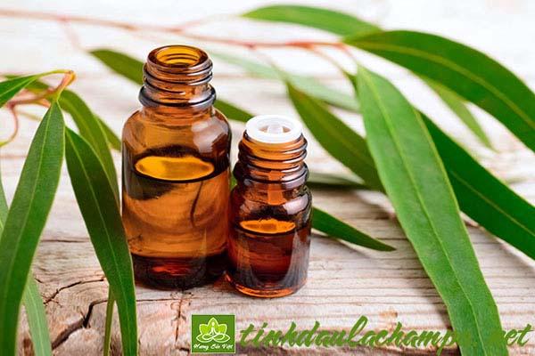 Những công dụng và cách sử dụng tinh dầu Bạch đàn chanh